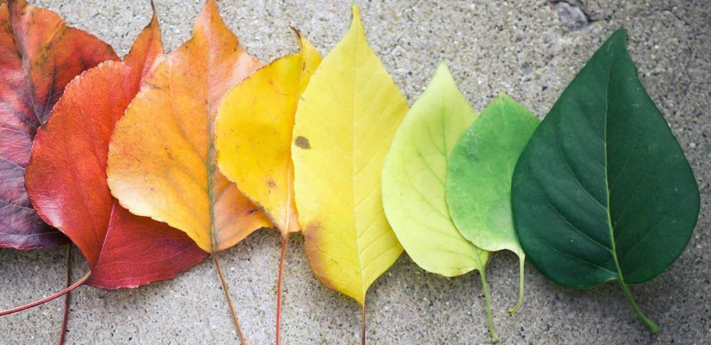 Leaves of Different Colors